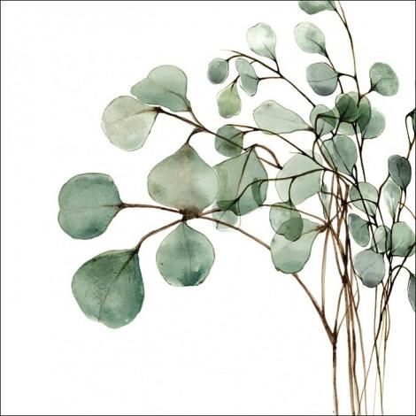 Olejek Eteryczny 6ml - Eukaliptusowy